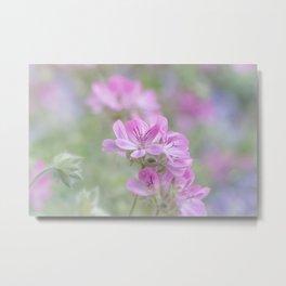 Pink Geranium flowers Metal Print