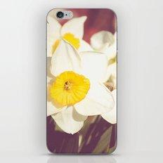 Daffodil flower iPhone & iPod Skin