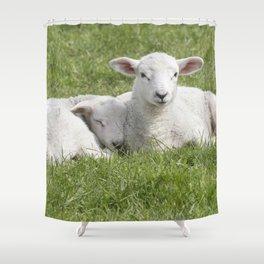 Spring little lambs Shower Curtain