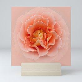 Apricot Ruffle V2 Mini Art Print