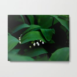 Lily Of the Valley With Large Green Leaves Metal Print