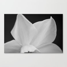 Unveiled Canvas Print