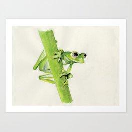 Glass Frog on leaf stem Art Print