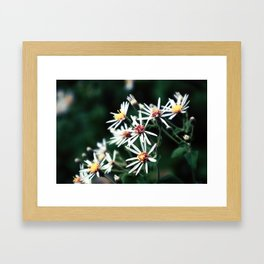 Soft Framed Art Print