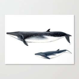 Bryde´s whale and baby whale Canvas Print