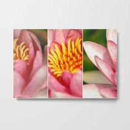 Water lily trio Metal Print
