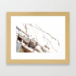 Drifted Palm Framed Art Print
