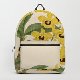 Dendrobium Suavissimum Backpack