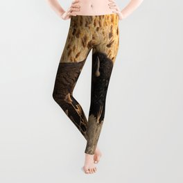 Bison - Antelope Island, Great Salt Lake, Utah Leggings