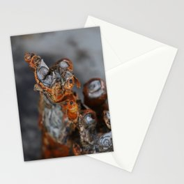 Mangrove Roots in Madagascar Stationery Cards