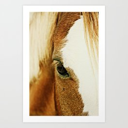 Fly In The Eye Art Print