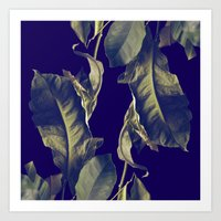 my lemon tree Art Print