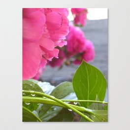 Flowers after the rain Canvas Print
