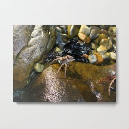Spider Rocks Metal Print