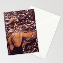CALIFORNIA POINT LOBOS STATE PARK NARA 543152 Stationery Cards