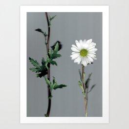 Daisy greenery abstract botanical Art Print