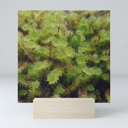 Green moss Mini Art Print