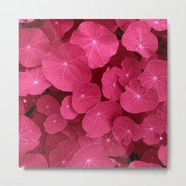 pink nasturtium leafs Metal Print