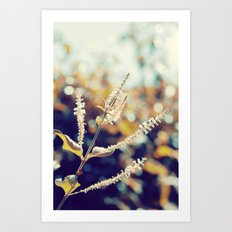 I sit in my garden, gazing upon a beauty that cannot gaze upon itself.   Art Print