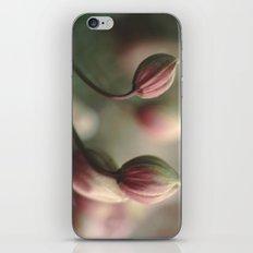 Montana Buds iPhone & iPod Skin