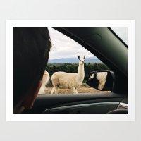 llama Art Prints featuring Llama by Ella Ares