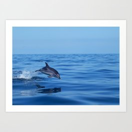 Spotted dolphin jumping in the Atlantic ocean Art Print
