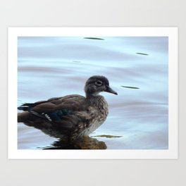 The youngest duck Art Print
