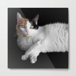Calico Cat on Black  Metal Print