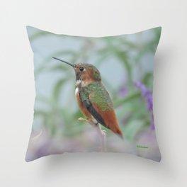 Allen's Hummingbird Sentinel Throw Pillow