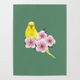 Yellow Budgerigar Poster