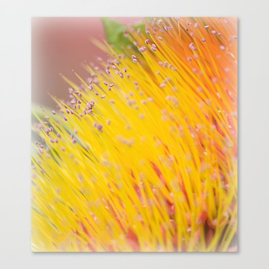 Through a Field of Yellow Canvas Print