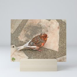 Lovely runaway canary bird Mini Art Print