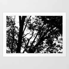 Pecan Tree Silhouette Art Print