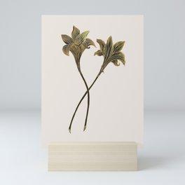 Indian Lily Daffodil Mini Art Print