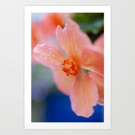 Pink Begonia Flower Art Print