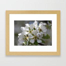 Pearblossom Framed Art Print