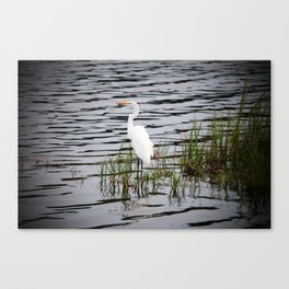 Egret Patiently Waiting Canvas Print