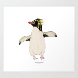 Northern Rockhopper Penguin (eudyptes moseleyi) Art Print