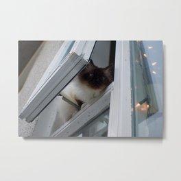 Icelandic Siamese Cat Metal Print