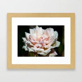 Hollywood Flower Framed Art Print