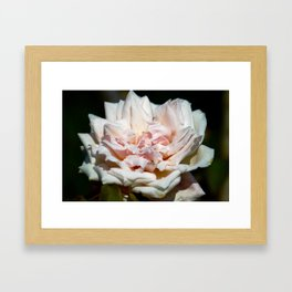 Hollywood Flower Framed Art Print