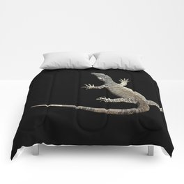 Lace Monitor Varanus varius Comforters