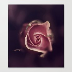 the rose Canvas Print