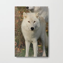 Beauty in those Eyes Metal Print