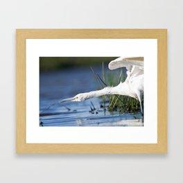 Bird attack Framed Art Print