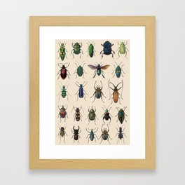 Insects, flies, ants, bugs Framed Art Print