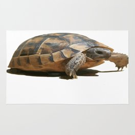 Portrait of a Young Wild Tortoise Isolated Rug