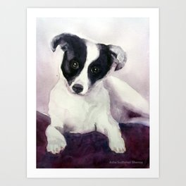 A stray dog up for adoption Art Print