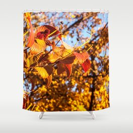 Fall Leaves Photography Print Shower Curtain