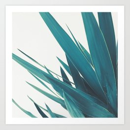 Yucca Leaves II Art Print